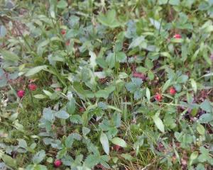 lawn harvest (2)